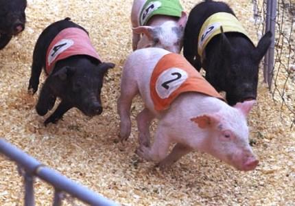 Porcii Gherghesenilor